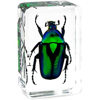 QTMY Insect in Resin Specimen Collection Paperweight for Office Desk,Christmas Gift for Men Women Biology Science Teacher Education (Green Cockchafer Beetle)