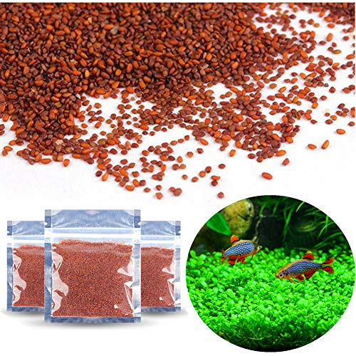 Zafina 3 Pack Aquarium Plant Seeds, Easy to Grow Aquatic Plant Seeds, Fast Growing Aquarium Carpet Seeds - Creates a Natural Ecosystem for Your Fish