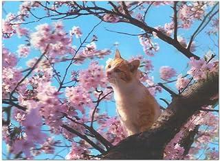 春カード(多目的) サクラ3Dポストカード 1枚入り PN-1129 横 桜とねこ さくら グリーティングカード EASE