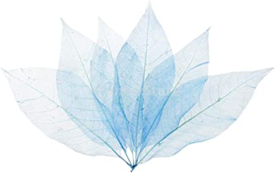 50pcs Natural Magnolia Skeleton Leaf Leaves Card Scrapbook Craft Supply #4