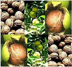 Best northern california walnut tree Reviews