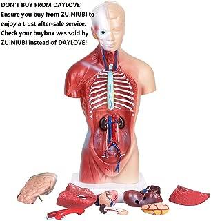 ZUINIUBI Human Torso Body Anatomy Model Heart Brain Skeleton Medical School Educational 11inch