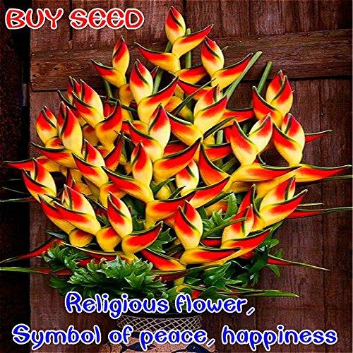2017 nouvelles Plantes d'intérieur Fleurs Strelitzia Reginae Graines oiseau de paradis semences de fleurs pour le jardin et Jardin Bonsai 100 Pcs/sac transparent