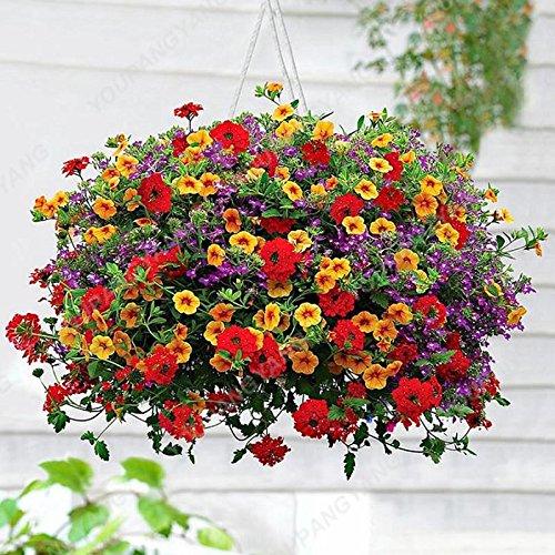 200pcs Bonsai couleurs mélangées Graines Petunia Belle Graines de fleurs Jardin Plante Pétunia Graine Balcon cadeau rare Décoration Autres