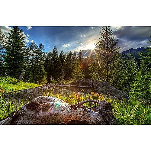 Accesorios de Fondo de fotografía de Vinilo, Fondo de fotografía de Paisaje de iluminación, Accesorios de fotografía de Estudio fotográfico A4 7x5ft / 2,1x1,5 m