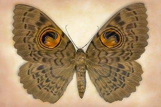 Owlet Moth Poster Print by Richard Reynolds (36 x 24)