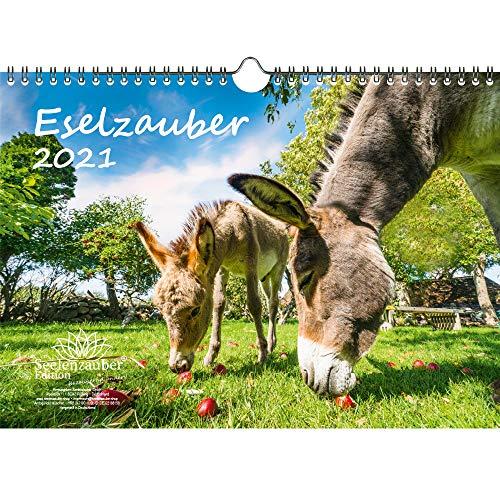 Eselzauber DIN A4 Kalender für 2021 Esel - Seelenzauber
