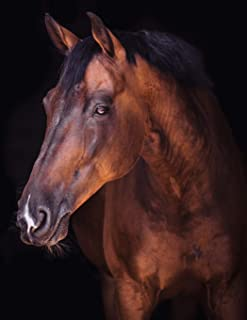 Notebook: Horse whey grass browser spring ditch pony thoroughbred foal mare saddle wild horse