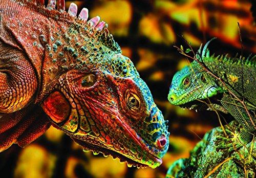 Welt-der Droom Mural 10568_P-MS Fotobehang, bonte comodo draken|| Photo Wallpaper Mural 10568_P-MS | Wilde dieren natuur draak comodo hagedis Natuur P8 (368cm. x 254cm.) bruin, geel, groen, blauw