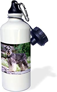 3dRose Schnauzer - Sports Water Bottle, 21oz (wb_264_1)