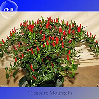 Heirloom Thai Sun Hot Pepper Capsicum annuum Ornamental Chili Seeds, Professional Pack, 100 Seeds / Pack, Mini Hot Pepper Seeds