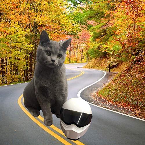 MHCYKJ Mini Pet Helmet Cat Decorations, Décorations de Collection de Moto Sombrero Perro Gato Sombrero Casco Decoración para Super Mini Perro Gato Actividades al Aire Libre