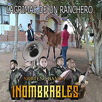 Lagrimas de un Ranchero