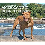 For the Love of American Pit Bull Terriers 2020 14 x 12 Inch Monthly Deluxe Wall Calendar with Foil Stamped Cover, Animal Dog Breeds 3