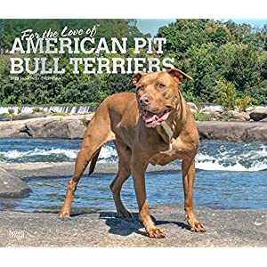 For the Love of American Pit Bull Terriers 2020 14 x 12 Inch Monthly Deluxe Wall Calendar with Foil Stamped Cover, Animal Dog Breeds 8