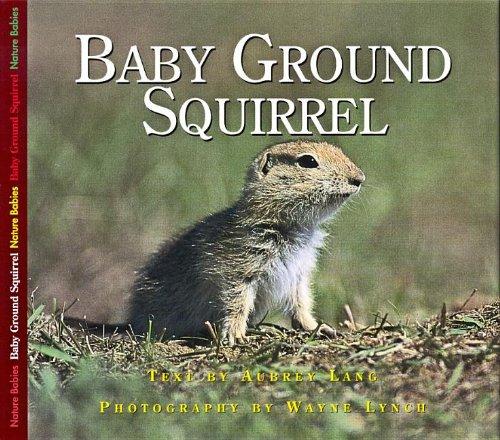 Baby Ground Squirrel (Nature Babies)