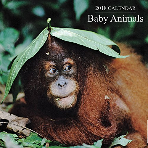 2018 Calendar: Baby Animals
