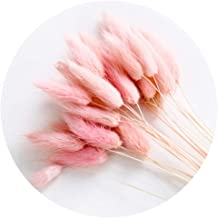 Color Life 110-120 Pcs Dried Natural Flowers Decoration |The Rabbit Tail Grass,Pampas Grass, Dried Fox Tail, Rabbit Tail Grass, for Home, Party Themed Decorations16in (Meat Pink)