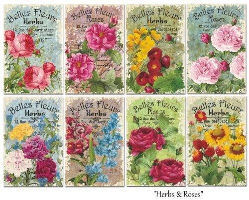 Paper Moon - Scrapbooking carta di lusso 10.5cm x 7cm x 8 fogli - Herbs & roses