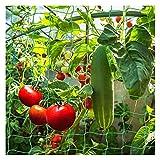 HJHQQ-CZYHG Sunshine Smile Plant Network Support Network Garden Rank Rank Rank Aids Giardino per Le Piante da Arrampicata Accessori Serra Garden Net (Color : Grün, Size : 1.8 * 3.6m)