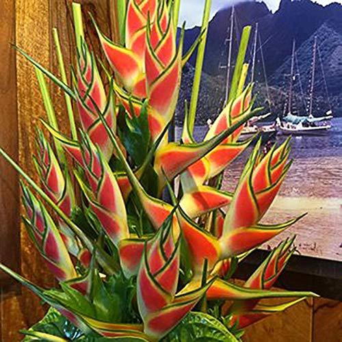 puran 50 Stück/Beutel Heliconia Seeds, Non GMO Gute Ernte Seltene Blumensamen Heliconia Seeds Natural Für Balkon Heliconia-Samen