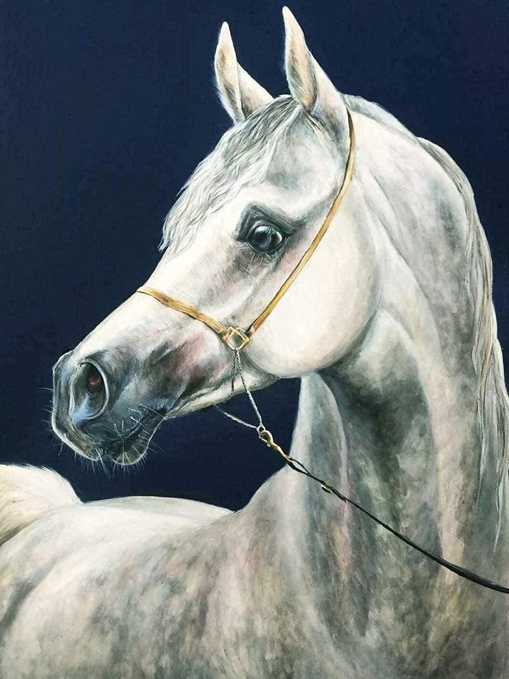 NYIXIA Stamped Cross Stitch Kits for Special price for a limited time Horse D Mail order cheap DIY Adults Beginner