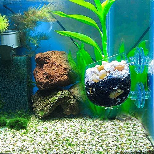 WEAVERBIRD Aquarium Pflanzenhalter klar Glas Pflanzen Topf mit Saugnapf für Aquarium-Landschaft Dekorationen