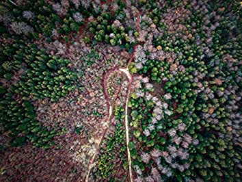 Windy Trees | Bio Energy Healing, Awakening Sounds, Yoga Music