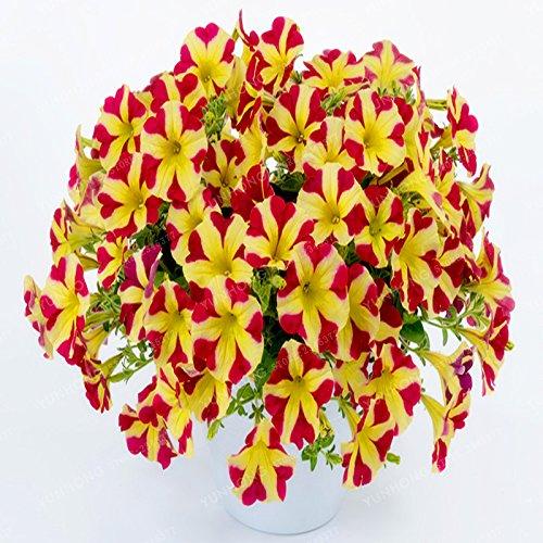 Escalade Pétunia Graines de fleurs Jardin Bonsai Balcon Petunia hybrida semences de fleurs de 20 espèces végétales Bonsai facile à cultiver 100 Pcs 19