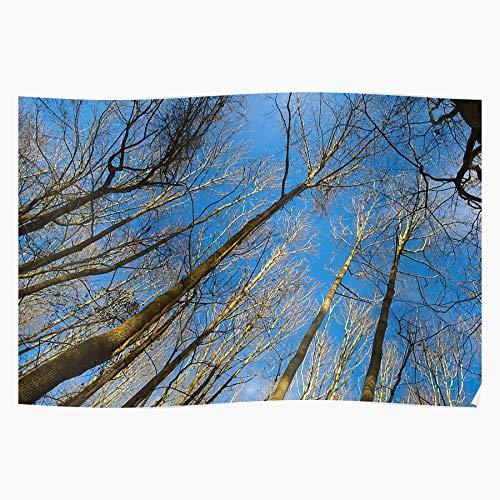Nature Blue Scenic Colorful Trees Vibrant Skies Awesomeness Das eindrucksvollste und stilvollste Poster für Innendekoration, das derzeit erhältlich ist