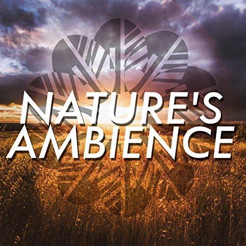 Ambiance Nature