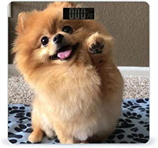 Balanza de peso digital de alta precisión para perros Pomeranian con pantalla LCD