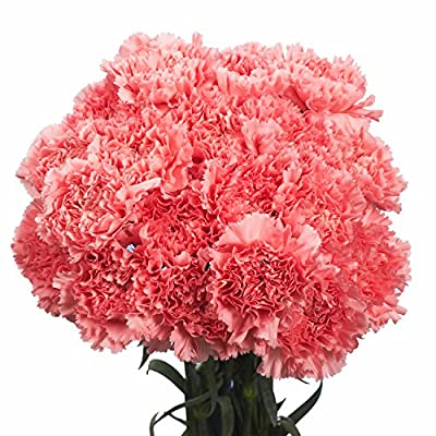 100 Pink Carnations- Beautiful Fresh Flowers by Globalrose