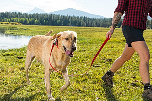 """RUFFWEAR - Headwater Waterproof, Stink-Proof, Reflective Dog Collar, Red Currant, 11""""-14"""