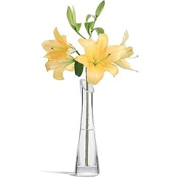 ComSaf 24cm 花瓶 斜め口 ミニ花器 ガラス製 透明 フラワーベース 一輪挿し 水栽培 インテリア飾り プレゼント