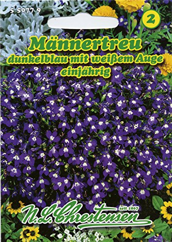 Männertreu 'Dunkelblau mit weißem Auge' , einjährig, beliebte, reichblühende Beet- und Gruppenpflanze 'Lobelia erinus'