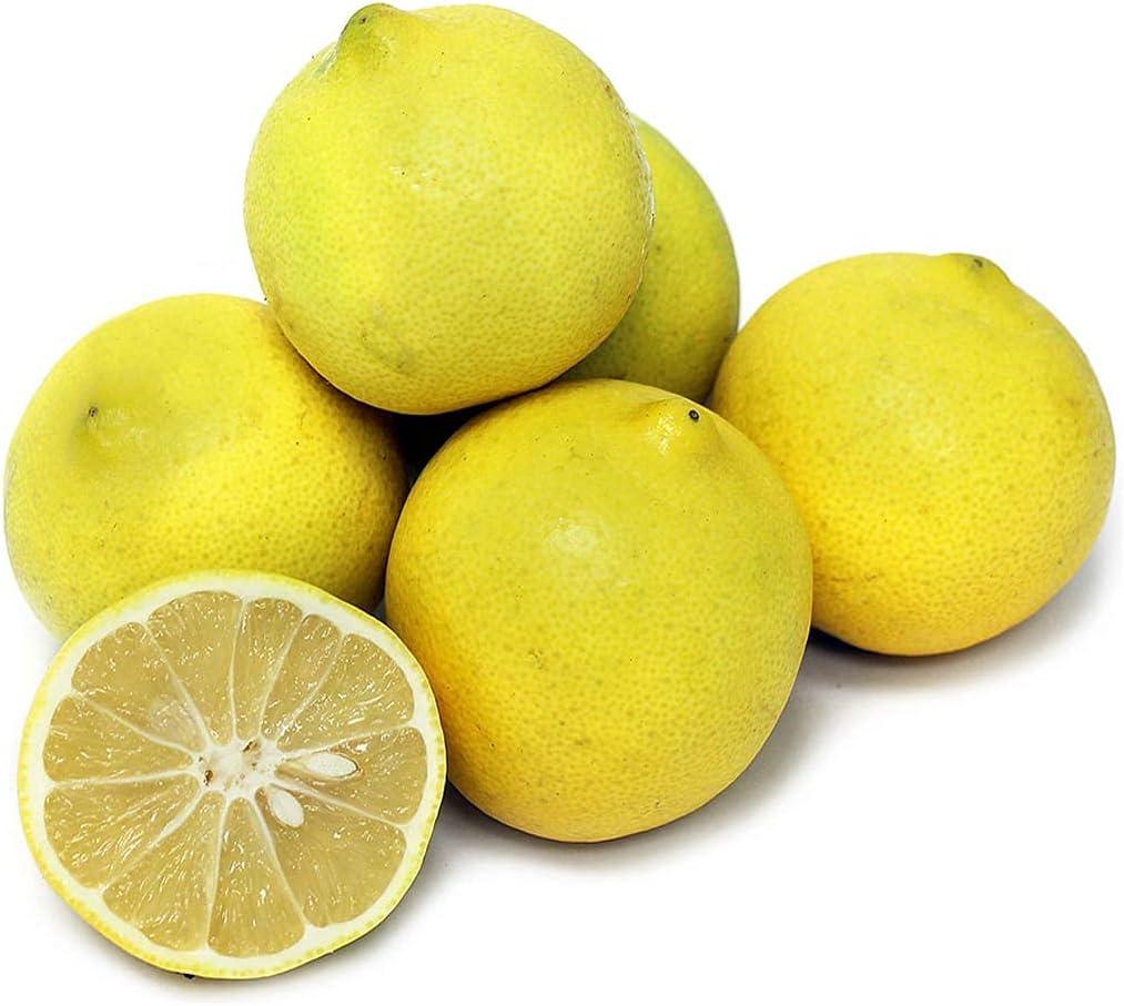 PAPCOOL Persian Sweet Special sale item Lẹmọn T.Ree NEW before selling Citrus Fịcụs Limetta -