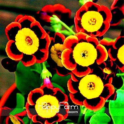 Big Sale! Liesl trois couleurs rares Graines Petunia fleur annuelle, 100 Pcs / Sac, Blooms et Fine Glaçage, # BLV3HH
