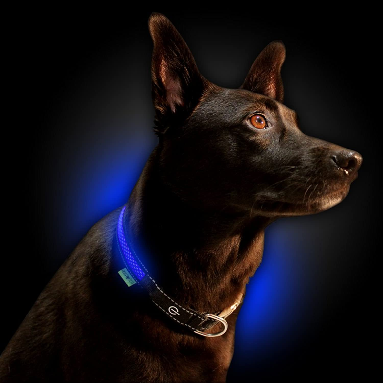 NINJA PETS Metal Buckle LED Dog Collar, USB ricaricabile, per Small Medium Large Dogs, Dog Collar Lights for Night Time Safety, Quick Release (Large, Royal Blue)