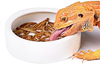 OMEM Worm Dish Mini Reptile Food Bowl Ceramics Made
