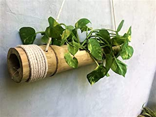 COIR GARDEN Bamboo Hanging Planter With Adjustable Rope, Average length is from 40cm - 55cm. Diameter is 8cm - 12cm, 1 Piece