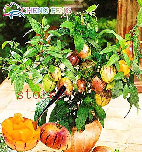 Pinkdose® 100pcs plantes rares Mini doux Melon Aubergine Fleur Plante en pot Jardin Arbres fruitiers du Sud États-Unis Bonsai Doux Fruit: Violet