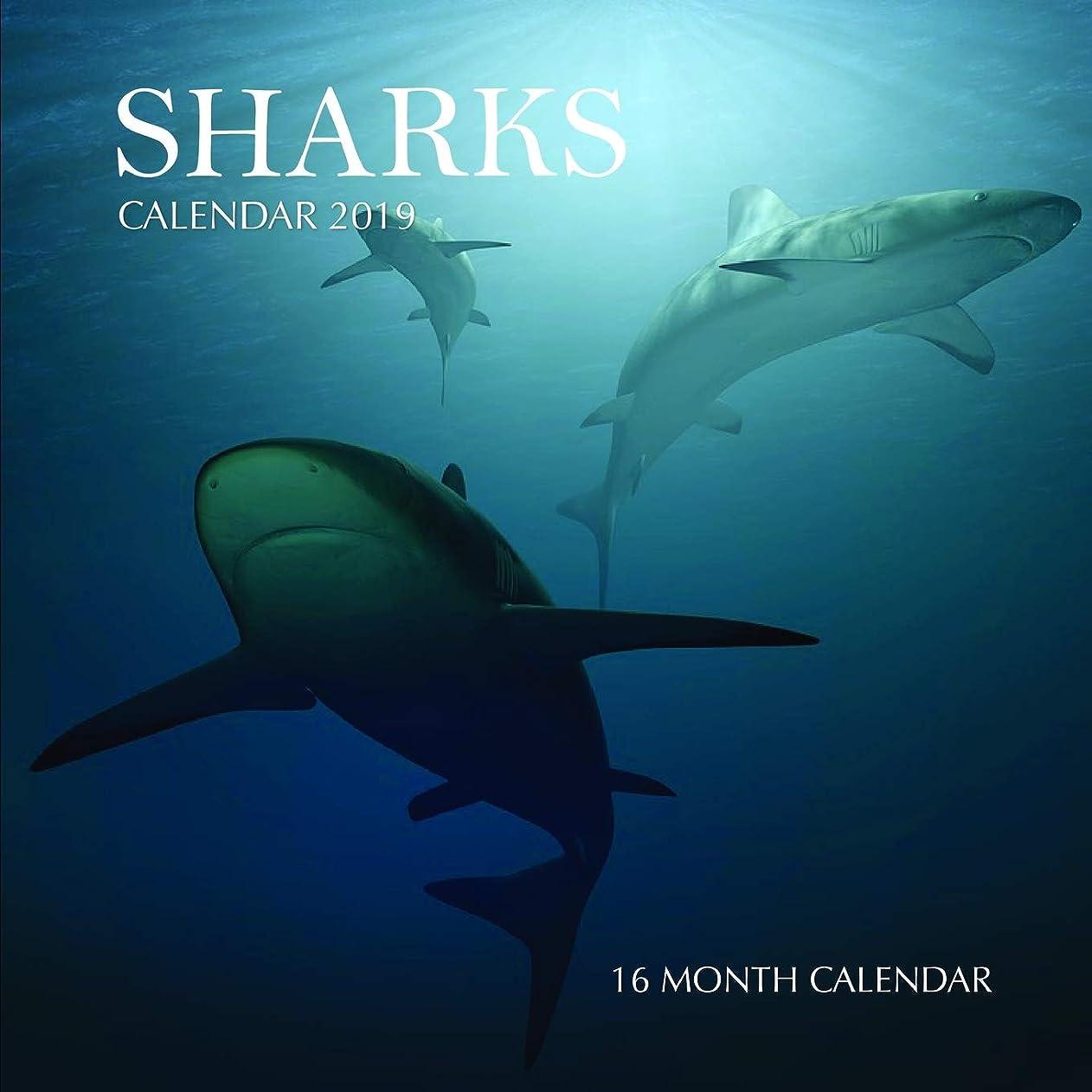 ひいきにする励起コーンウォールSharks Calendar 2019: 16 Month Calendar