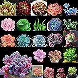 ScoutSeed 3#: 100 Samen Gemischte Sukkulenten Samen Lebende Steine Pflanzen Kaktus Hausgartenpflanze