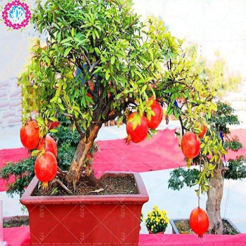 50pcs/sac de graines de grenade bonsaï graines de fruits délicieux très doux, des plantes succulentes vivaces graines d'arbres petits bonsaïs pour la maison et le jardin