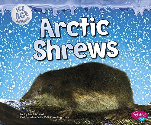 Arctic Shrews (Ice Age Animals)