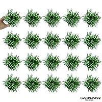 LAND PLANTS タマリュウ(玉竜) 20個セット 2.5号サイズ 7.5cmポット