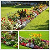Zones3 - 10 An easy to grow mixture providing an abundance of attractive wild flowers to add colour, grace and interest to the garden. Ideal Regions:Northeast Southeast Midwest West Southwest Pacific Northwest Suitable for the flower border or wild a...