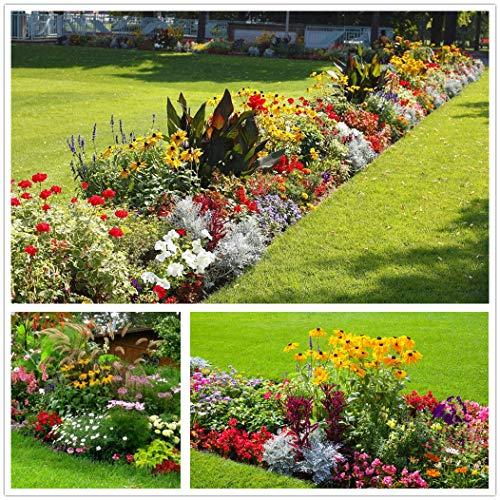 Miscela di semi di fiori selvatici perenni al 100% Le piante da prato annuali attirano le api e le farfalle (100 g = 100000 +) Miscela di semi di fiori selvatici puri