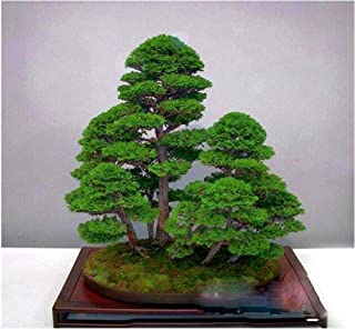 Best-Selling!50 Pieces/Pack Juniper Bonsai Tree Potted Flowers Office Bonsai Seeds Purify The Air Absorb Harmful Gases